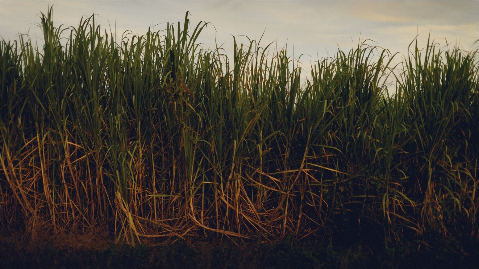 Rural Louisiana Engagement 14